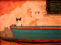 Italian Cat in a Boat (black and white cat sitting on the left side of red and green boat)